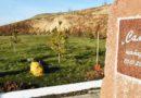 Шымкенттегі шатқалдарға егілген ағаштардың саны 79 мыңға жетті